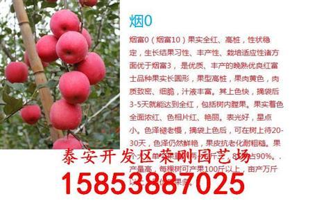 山东烟富10苹果树苗种植基地 烟富10苹果树苗种植基地